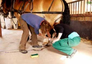 Rider and groom – meet SA's only para-equestrian team